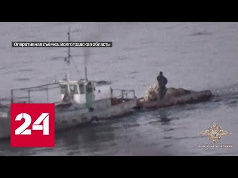 В Волгограде задержаны браконьеры, притворявшиеся учеными - Россия 24