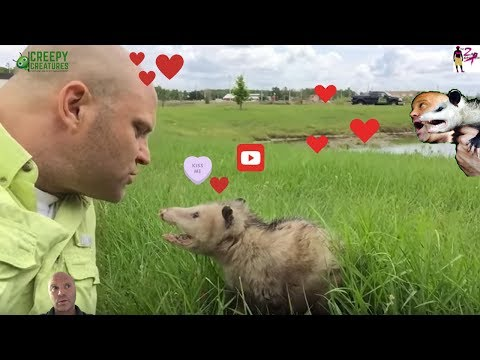 Kissing The Opossum