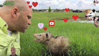 Kissing The Opossum