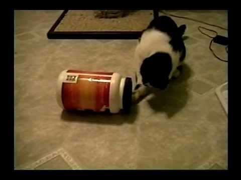 My Cat Zen Opens His Food Container – Stupid Cat Tricks