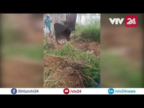 Thực hư chuyện phát hiện 300 xác thai nhi trong nhà máy rác Cà Mau | VTV24