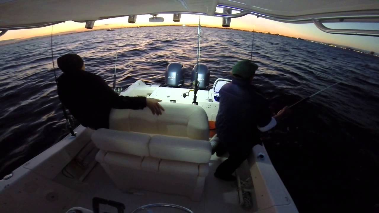 Belmar nj striper fishing oct 2014 youtube for Belmar nj fishing report