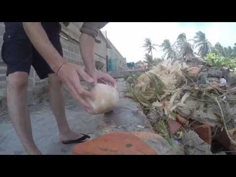 Cleaning a Coconut. Mui Ne, Vietnam - GoPro