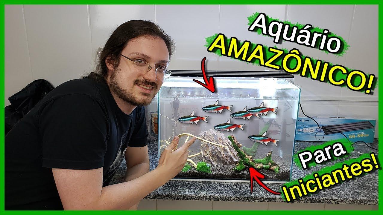 Montando um Aquário Amazônico SIMPLES e BARATO para INICIANTES!