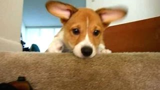 Cute Puppies Who Are Afraid Of Stairs Compilation [BEST OF]