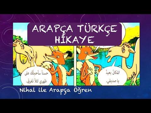 Arapça Türkçe Hikaye Kurnaz Tilki/ الثعلب الماكر