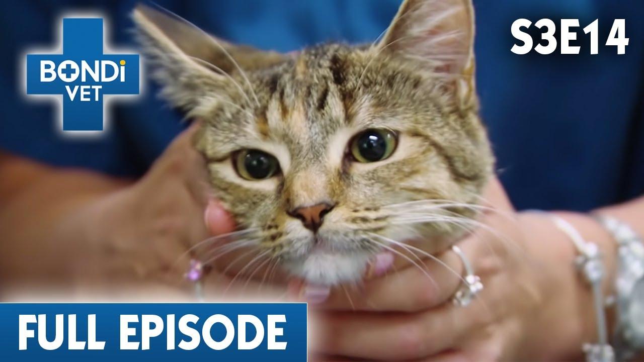 😿 Cat Has Headache | S03E14 | Bondi Vet
