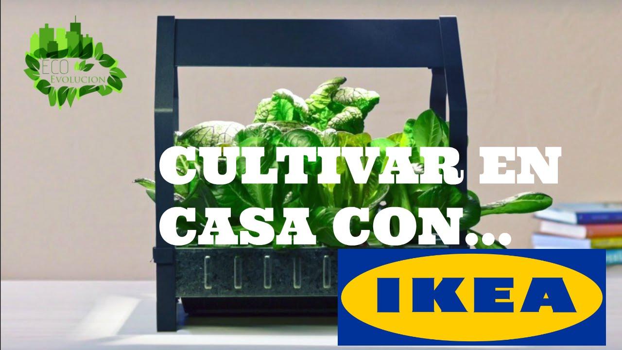 Kit De Cultivos Caseros De Ikea Ecoevolucion Youtube