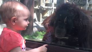 Orangutan kisses baby girl through glass at Toledo Zoo