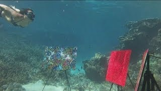 Take a Tour of the Underwater Art Gallery at Great Barrier Reef