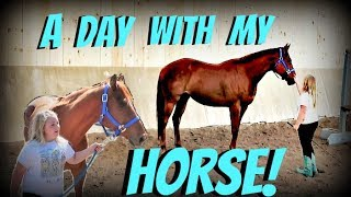 1st day with our new horse day 149 052918