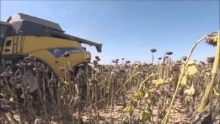 ~Moisson de Tournesol 2015!~ New Holland CR 90.70 & Massey ferguson~ Harvest Sunflower