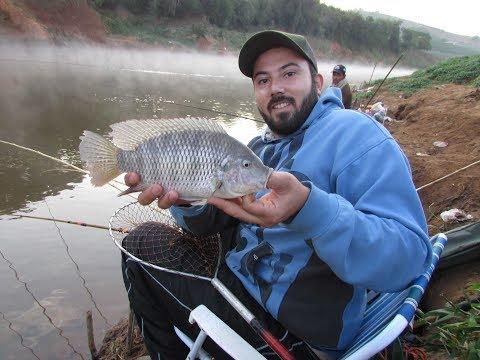 Pescando as Tilápia selvagem do rio verde - Sul de Minas