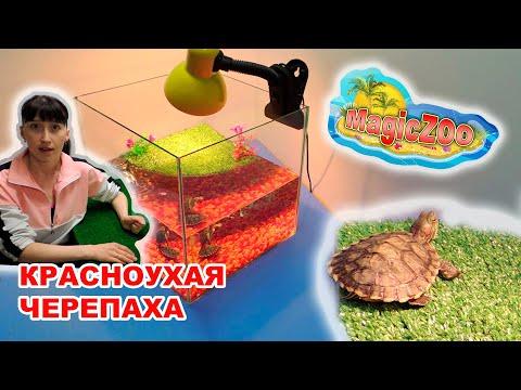Вопрос: Как создать среду обитания в доме для коробочной черепахи?