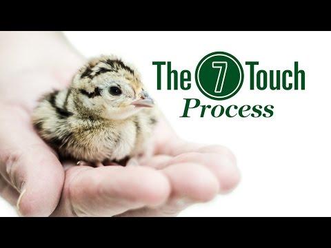 Gisi Pheasant Farms Web Video: 7 Touch Process