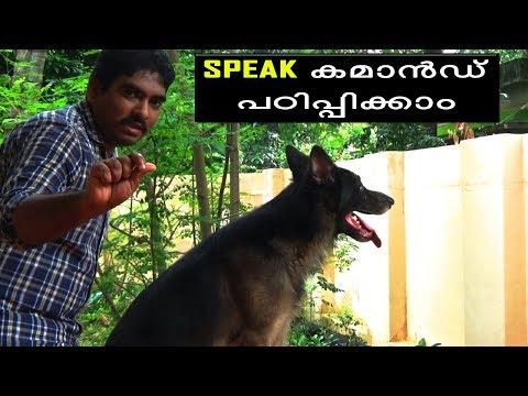 "dog training : "" speak command""  Malayalam:kerala dog training : വളര്ത്തു നായയെ പരിശീലിപ്പിക്കാം"