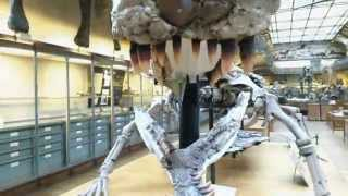 Sarcosuchus - Any resemblance to any politician is ... in the eye of the beholder