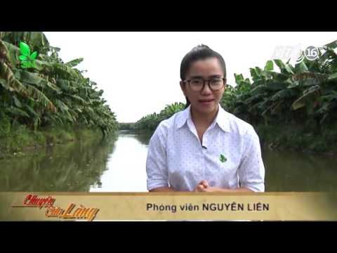 Vườn chuối nông trường sông hậu