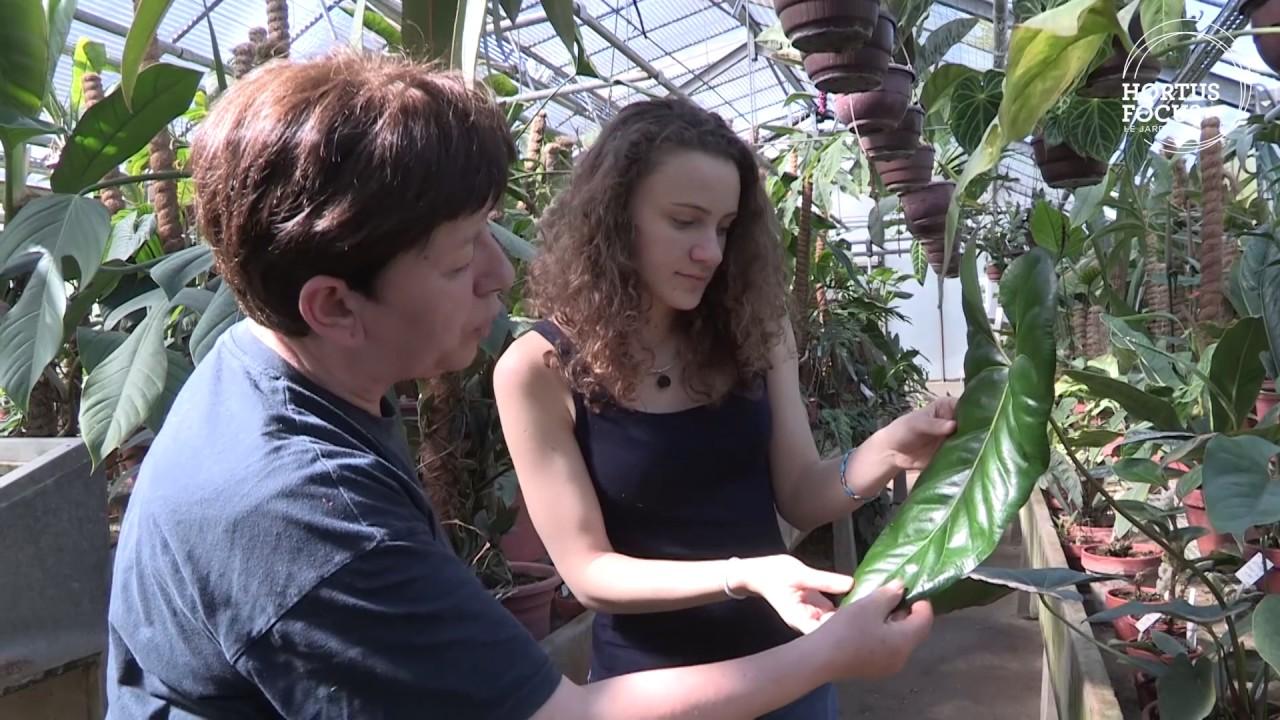 Découverte : Serre tropicale - Jardin JM Pelt à Nancy - YouTube