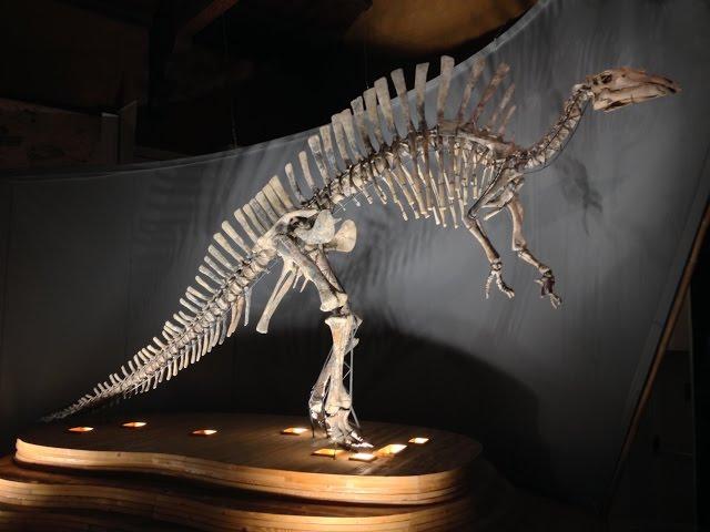 Visita al Museo di Storia Naturale di Venezia 2015
