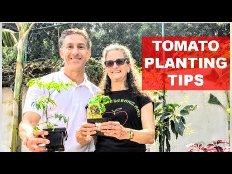 Tomato Planting Tips by JudysHomeGrown.com  |  Determinate vs. Indeterminate Varieties