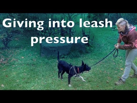 how to train your dog to heel video