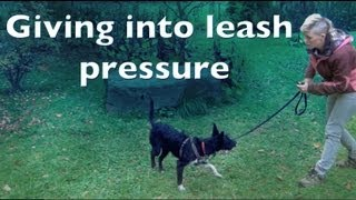 Giving Into Leash Pressure-  For Shy Reactive Dogs