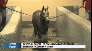 EXTRAIT - Prince du désert : le pur sang arabe de course - Equidia Life