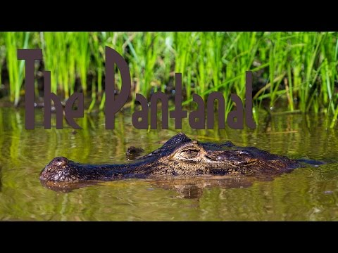 Searching for Wildlife in the Pantanal of Brazil