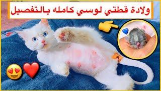 قطه تلد 4 قطط جميله ولادة قطتي لوسي كامله 😍❤️ / Mohamed Vlog