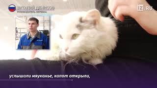 В Кузбассе кошка проехал под капотом автомобиля более 100 км и осталась жива   28 февраля 2019, 00 1