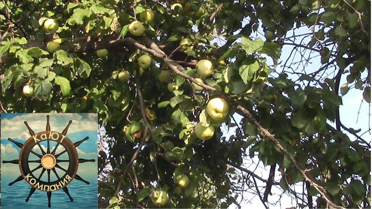 Яблочный сок на Зиму в Соковарке! Натуральный сок ...