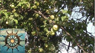 Яблочный сок на Зиму в Соковарке! Натуральный сок! Подробно полный процесс!