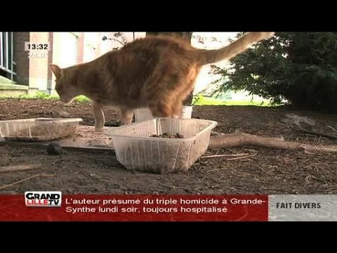 cause animale nord surpopulation des chats lille youtube. Black Bedroom Furniture Sets. Home Design Ideas
