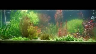 Entwicklung einer Algenblüte im Aquarium Teil 2