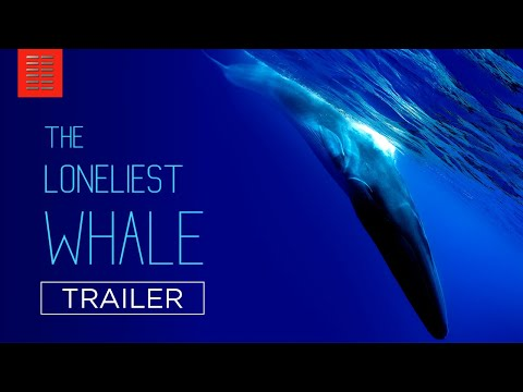 THE LONELIEST WHALE   Official Trailer   Bleecker Street