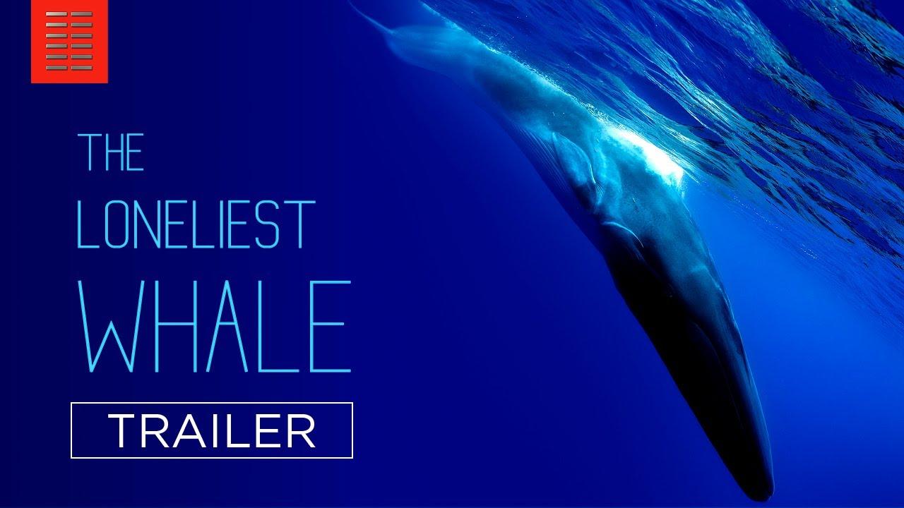 Sedona Film Festival presents 'The Loneliest Whale' premiere Aug. 6-12