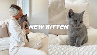 BRINGING HOME OUR NEW BRITISH SHORTHAIR KITTEN | Stella Vataman