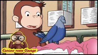 Curioso come George Tropeo de George Cartoni Animati per Bambini George la Scimmia