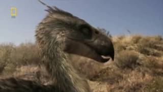 Животные мира Юрский период Иной путь Сила атаки Хищники эпохи Мощь челюсти Охота птицеящеров