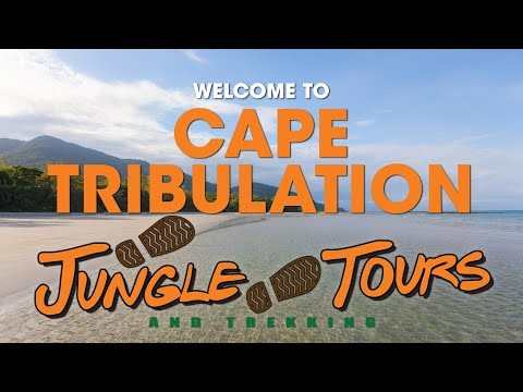 Cape Tribulation Tour with Jungle Tours