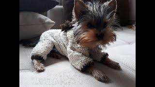 Комбинезон спицами для щенка. Одежда для щенков.