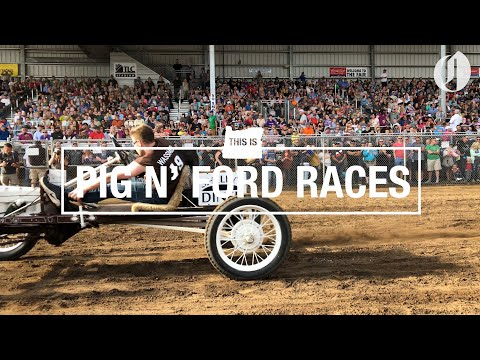 Swine are co-drivers in Oregon's totally unique Pig N' Ford Model T racing
