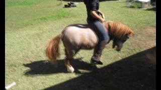 9 Hand High Pony Fail.