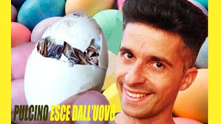Pulcino Esce Dall'uovo Fatto Incredibile