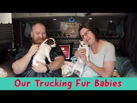 our-trucking-fur-babies-|-abbey-&-tyson