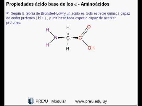 Estructuras quimicas de los amino acidos para bajar de peso