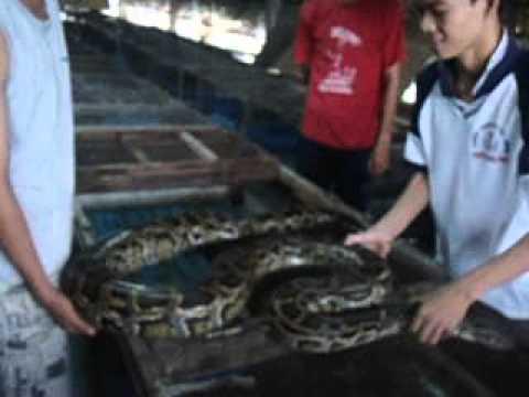 Trại trăn Hồng Quang.01