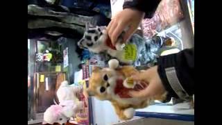 Танцующие коты и собаки. Funny dancing cats and dogs