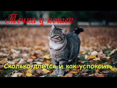 Вопрос: Какие кошки более красивые – породистые или уличные Почему?